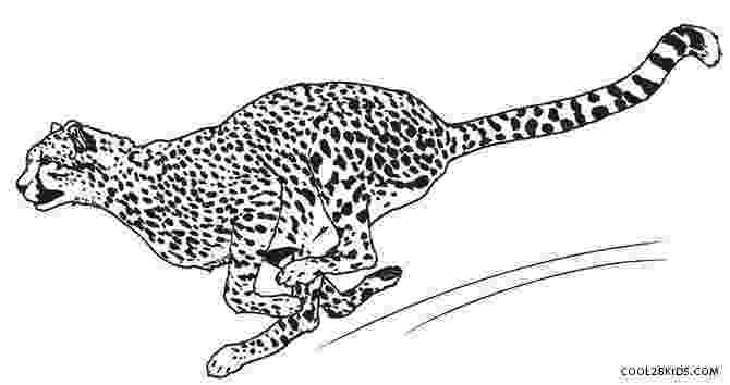 cheetah coloring page printable cheetah coloring pages for kids cool2bkids cheetah coloring page