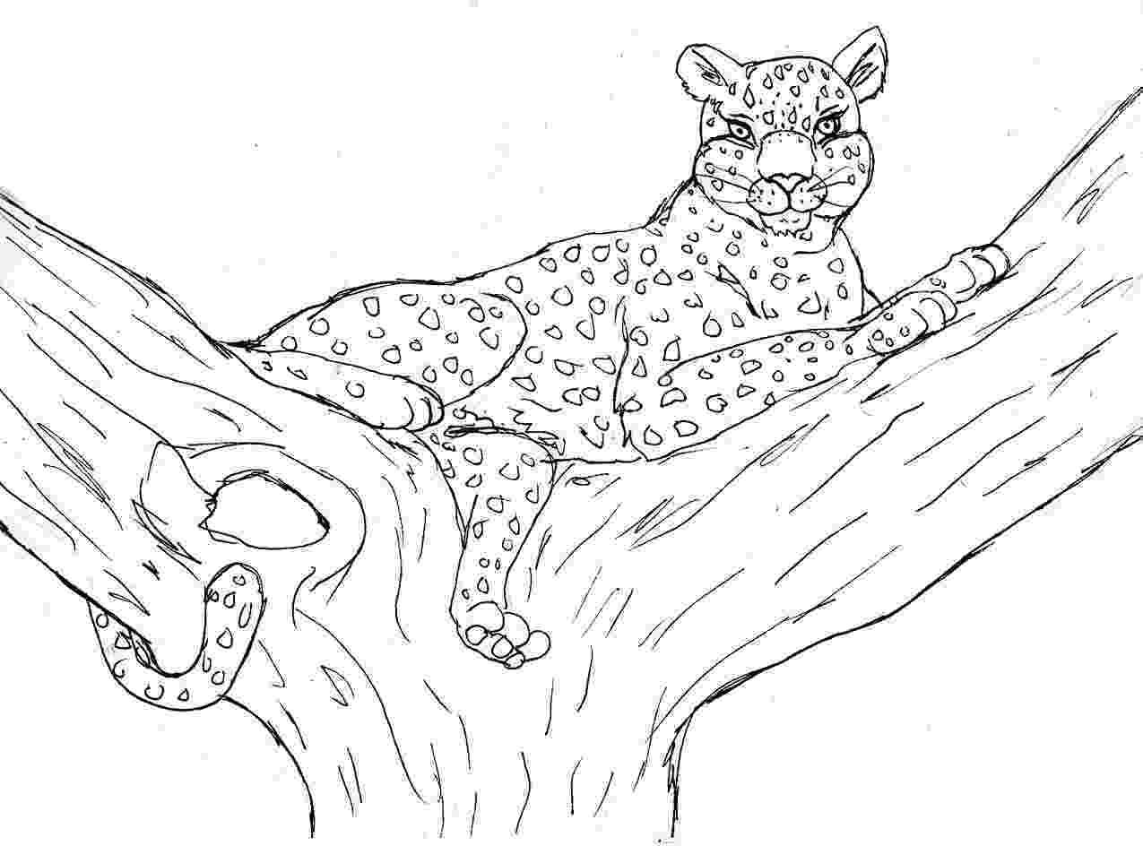 cheetah coloring page printable cheetah coloring pages for kids cool2bkids cheetah page coloring