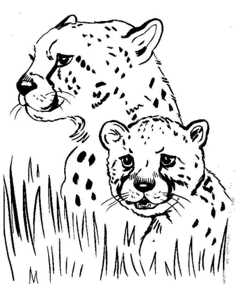cheetah coloring page printable cheetah coloring pages for kids cool2bkids page cheetah coloring 1 1