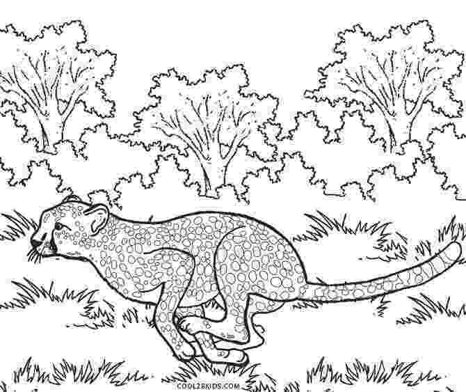 cheetah coloring page printable cheetah coloring pages for kids cool2bkids page cheetah coloring 1 2