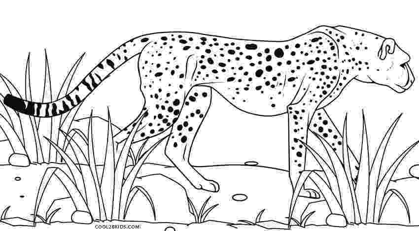 cheetah coloring page printable cheetah coloring pages for kids cool2bkids page coloring cheetah 1 1
