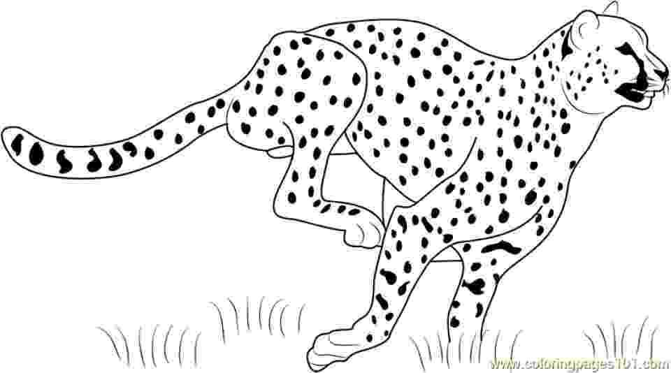 cheetah coloring page saharan cheetah coloring page free printable coloring pages page cheetah coloring