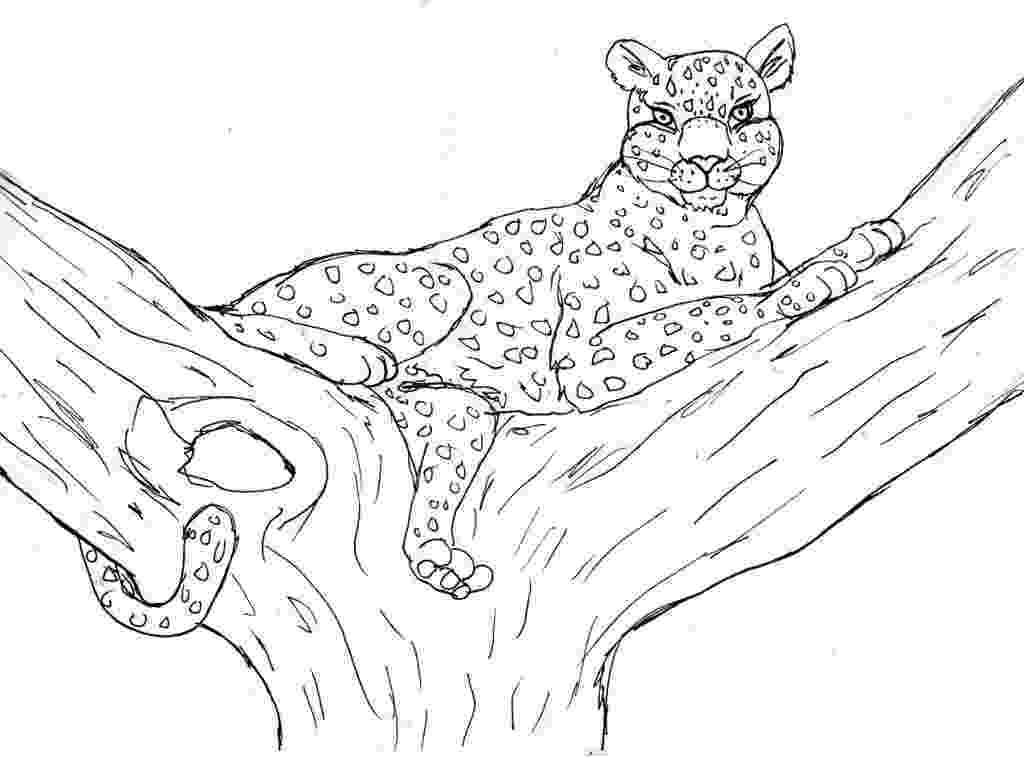 cheetah pictures to print cheetah coloring page animals town animal color sheets print pictures to cheetah