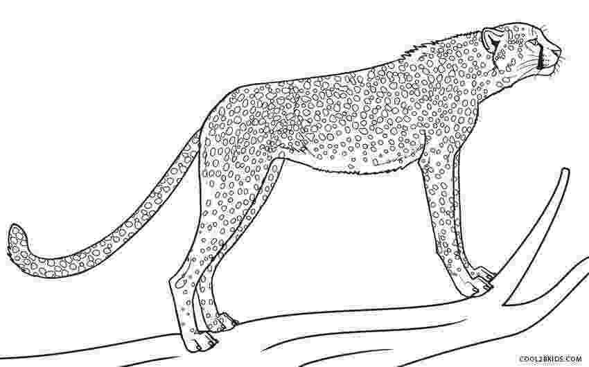 cheetah pictures to print cheetah coloring pages to download and print for free print cheetah pictures to