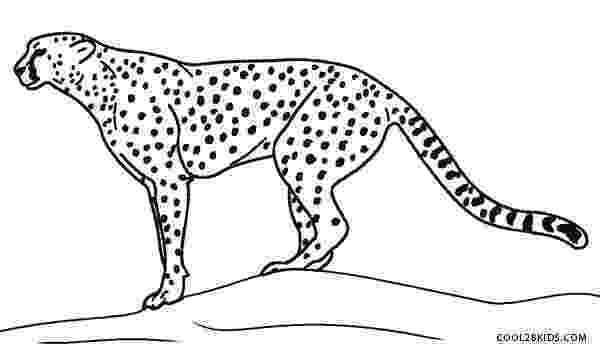 cheetah pictures to print printable cheetah coloring pages for kids cool2bkids cheetah print pictures to