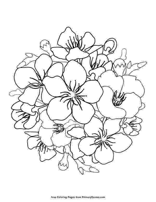 cherry blossom coloring pages 510 best coloring pages images on pinterest coloring pages cherry blossom