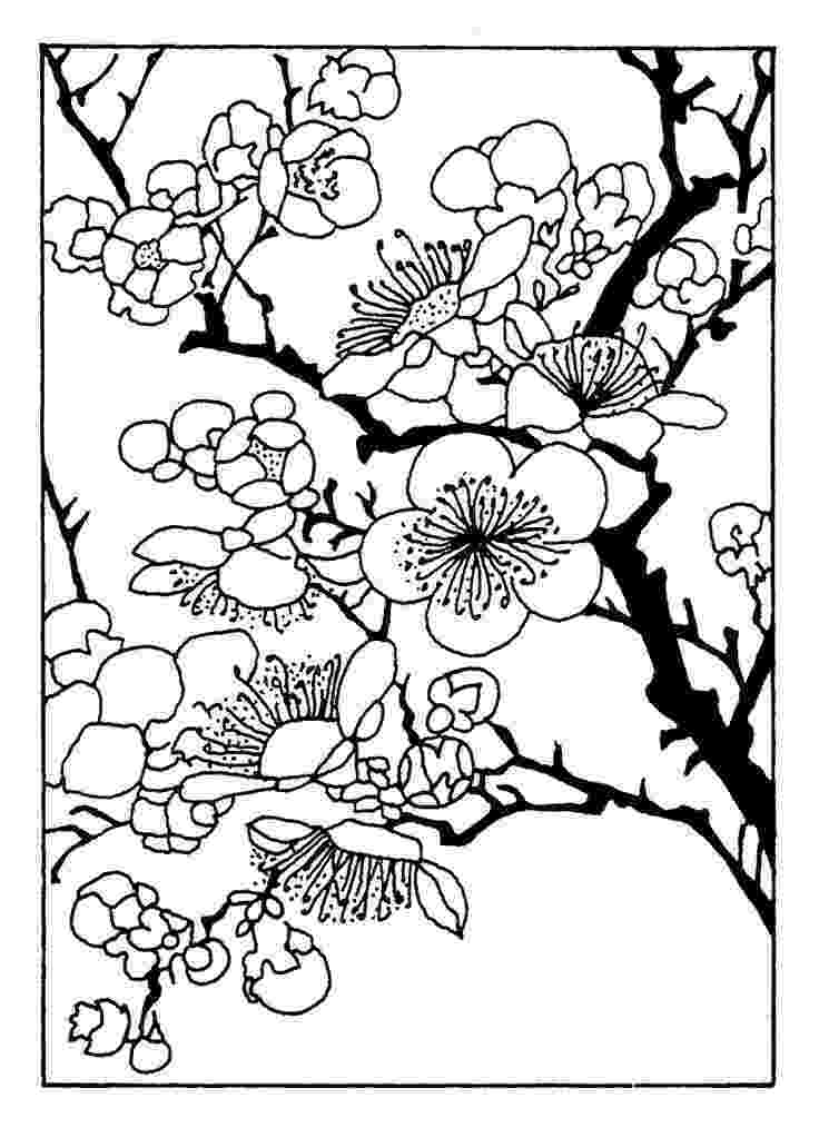 cherry blossom coloring pages cherry blossom coloring pages clipart best cherry coloring blossom pages
