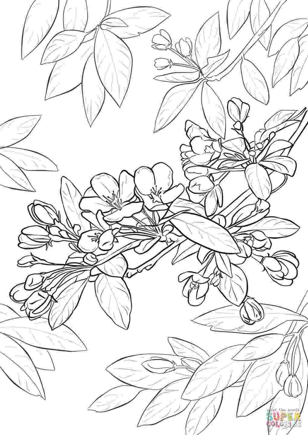 cherry blossom coloring pages cherry blossom tree drawing step by step at getdrawings blossom coloring cherry pages