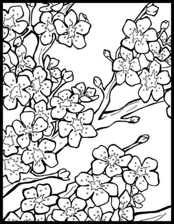 cherry blossom coloring pages cherry blossoms coloring page free printable coloring pages cherry blossom pages coloring