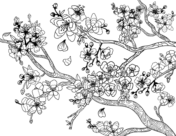 cherry blossom coloring pages free printable cherry blossom adult coloring page cherry coloring blossom pages