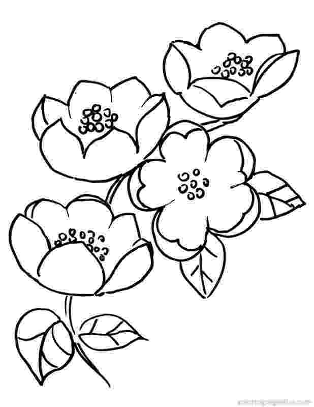 cherry blossom coloring pages japanese cherry blossom tree coloring coloring pages pages cherry blossom coloring
