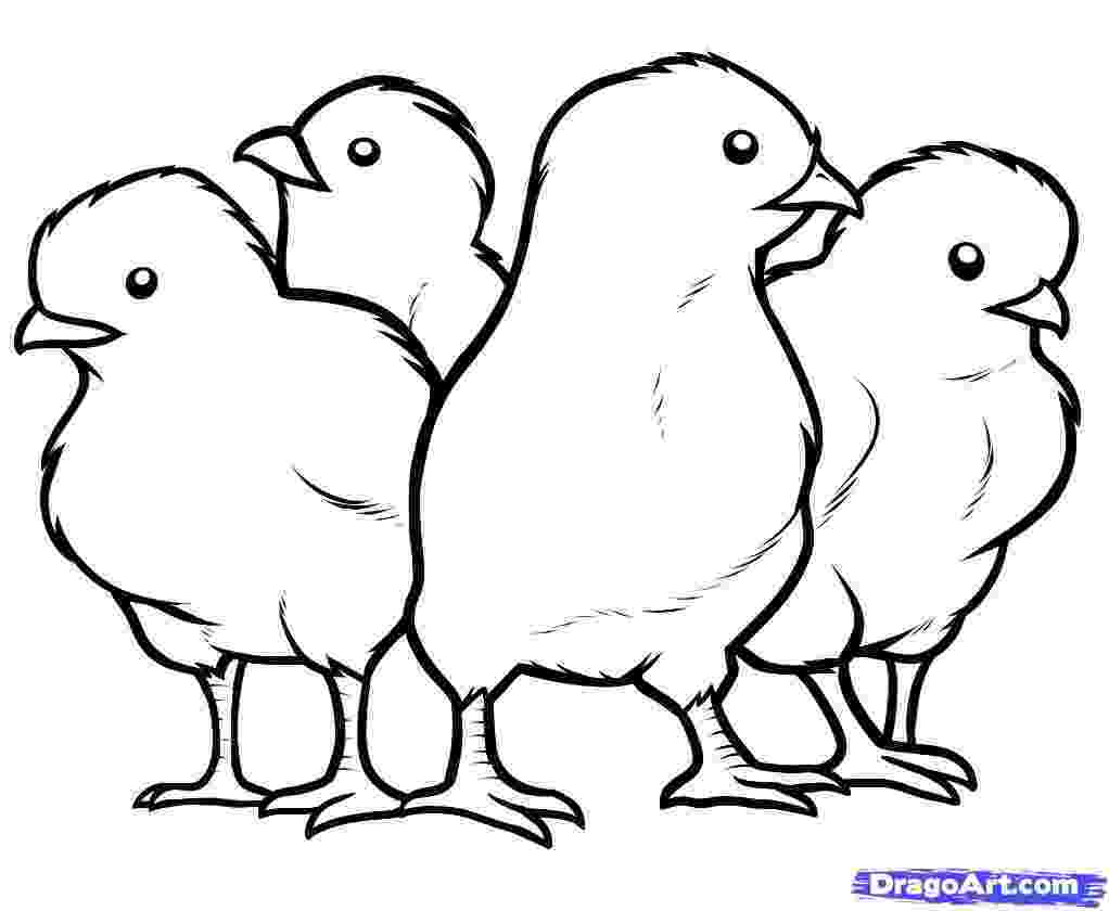 chicken pictures to colour rooster coloring page free rooster online coloring to chicken colour pictures