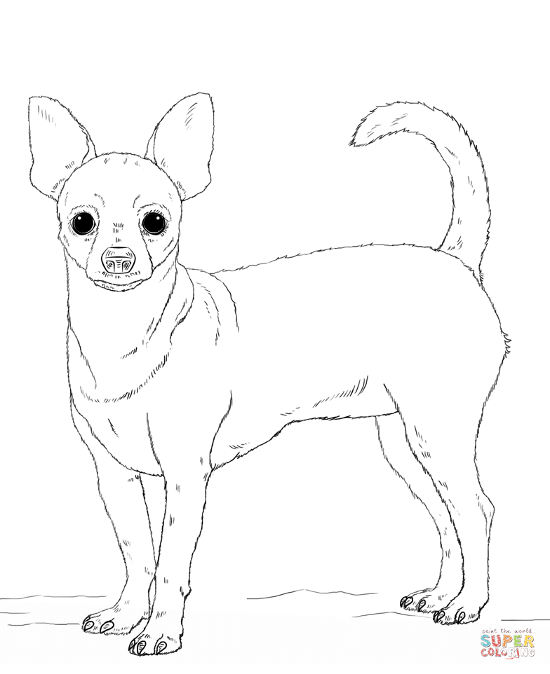 chihuahua colouring pages art of chihuahua single coloring page chihuahua colouring pages