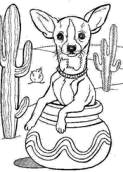 chihuahua colouring pages chihuahua coloring pages chihuahua pages colouring