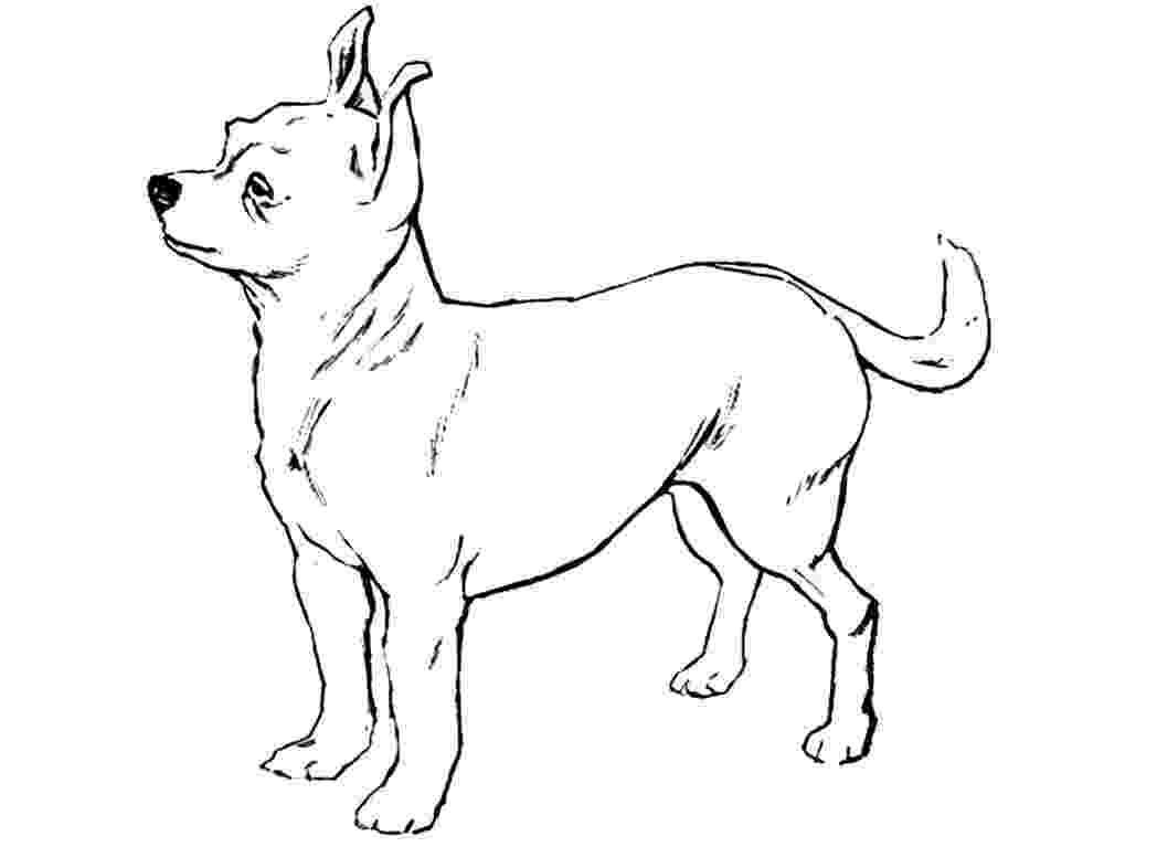 chihuahua colouring pages chihuahua dog coloring pages download and print for free colouring chihuahua pages