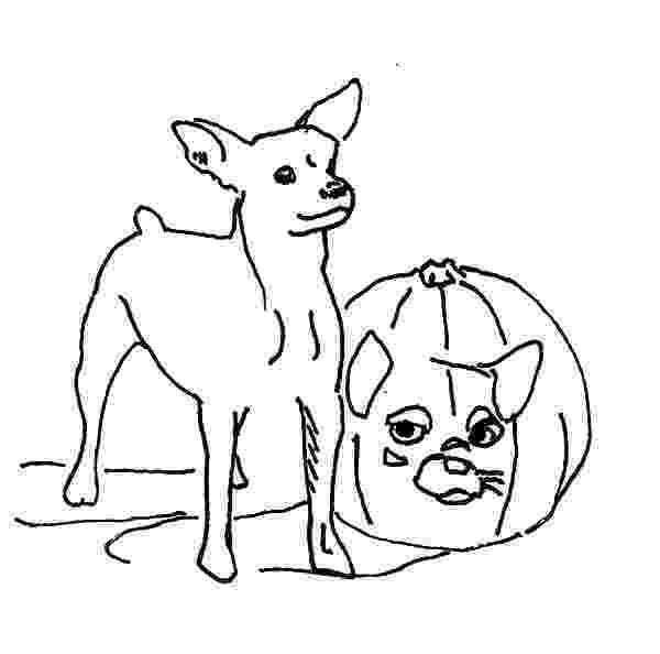 chihuahua colouring pages chihuahua dog netart colouring chihuahua pages