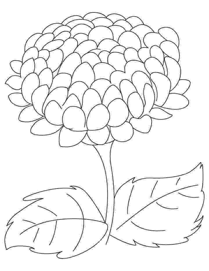 chrysanthemum coloring sheet chrysanthemum coloring page free printable coloring pages coloring chrysanthemum sheet