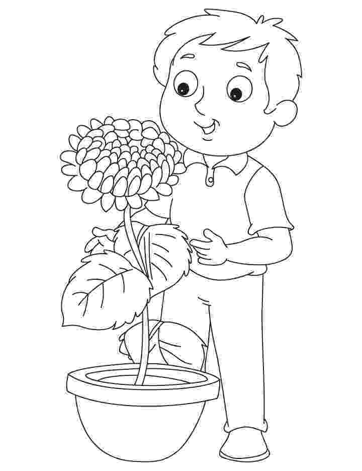 chrysanthemum coloring sheet chrysanthemum coloring pages to download and print for free chrysanthemum coloring sheet