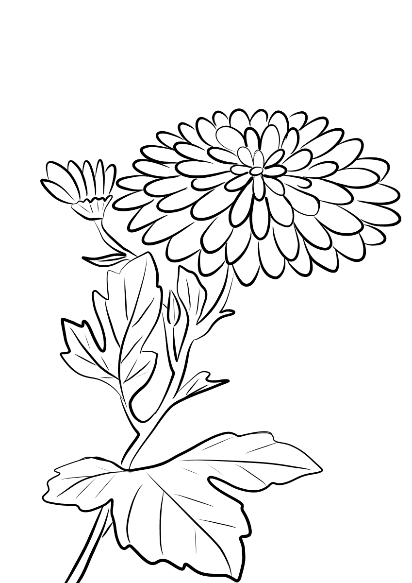 chrysanthemum coloring sheet chrysanthemum coloring pages to download and print for free coloring chrysanthemum sheet