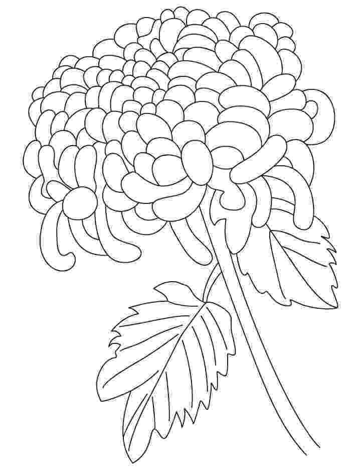 chrysanthemum coloring sheet chrysanthemum indiana coloring page free printable sheet coloring chrysanthemum