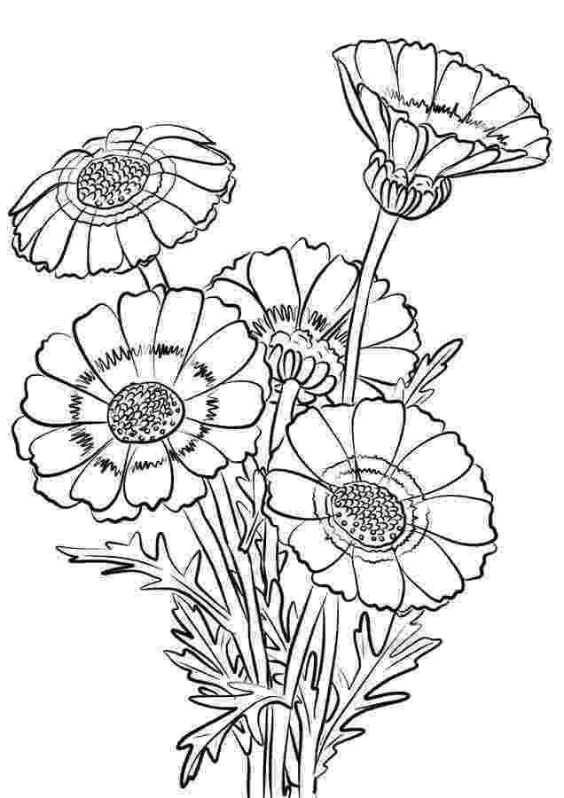 chrysanthemum coloring sheet chrysanthemum penny and her song coloring page chrysanthemum sheet coloring