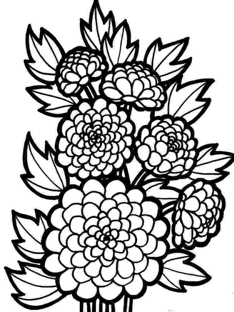 chrysanthemum coloring sheet flowering herb chrysanthemum flower colouring pages picolour coloring sheet chrysanthemum