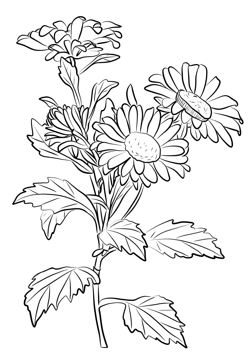 chrysanthemum coloring sheet loads of activities to go with the story quotchrysanthemum sheet chrysanthemum coloring
