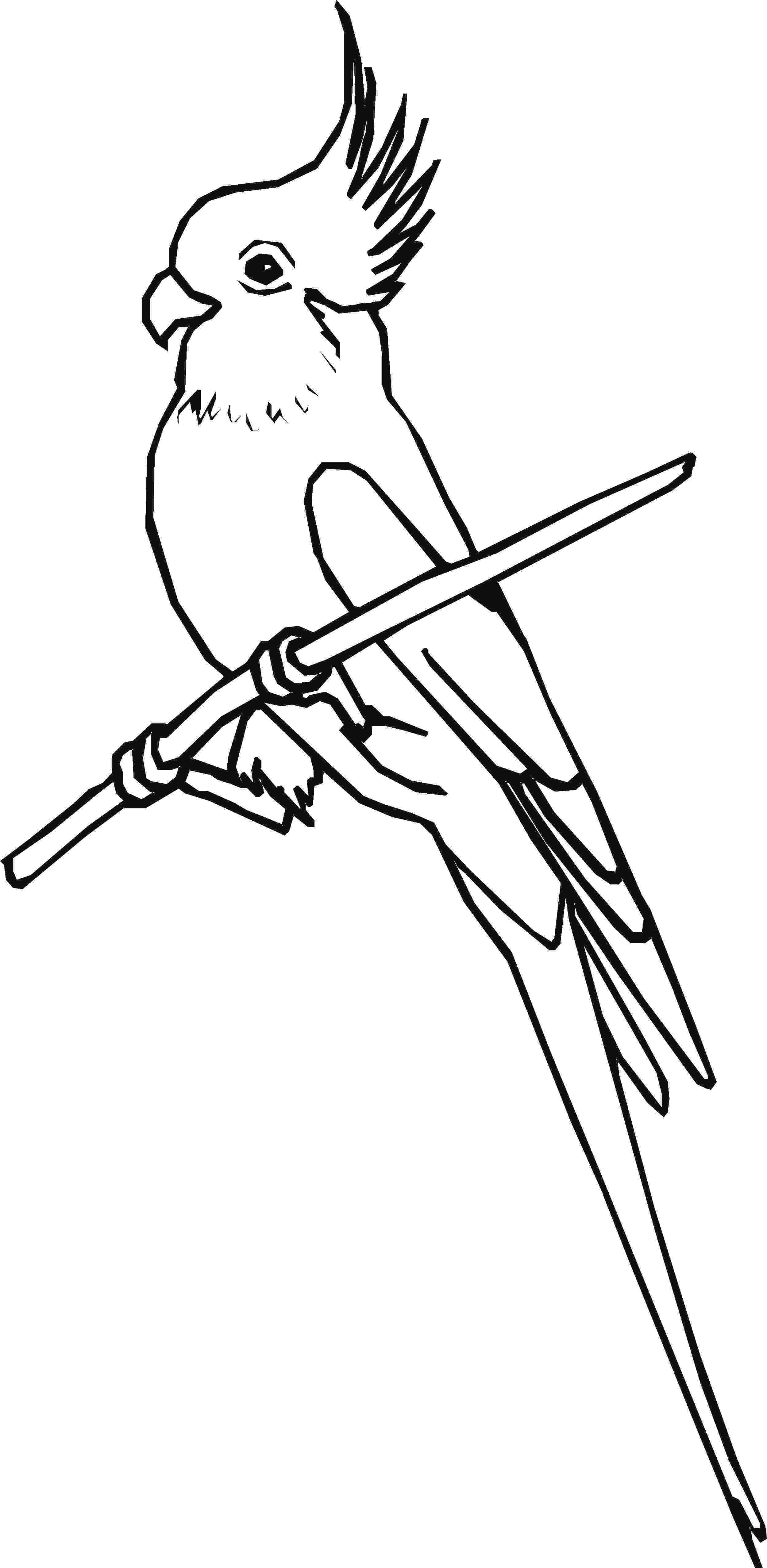 cockatiel coloring pages animal coloring pages children39s best activities coloring cockatiel pages