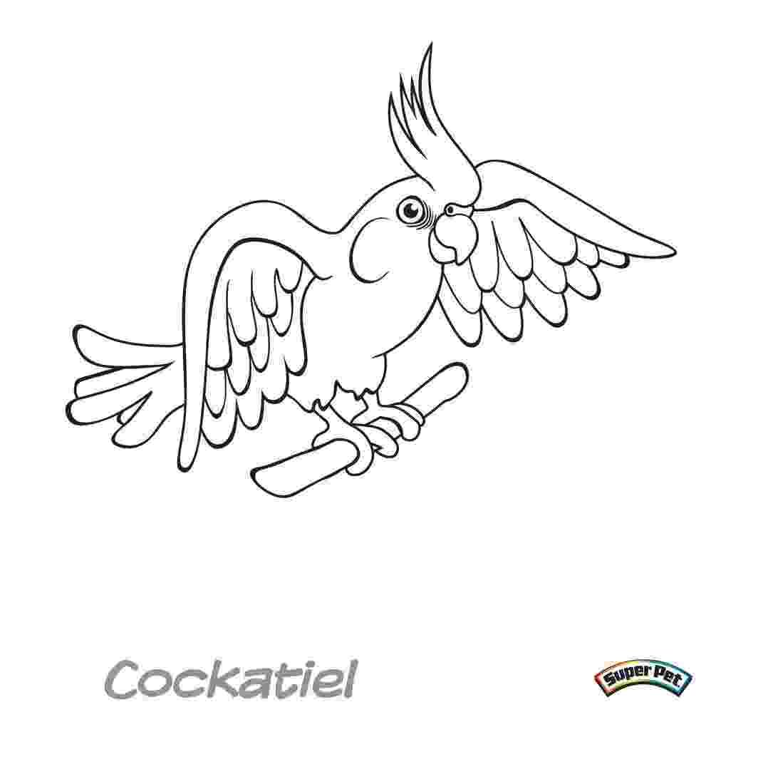 cockatiel coloring pages bird coloring pages coloring cockatiel pages