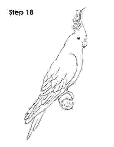 cockatiel coloring pages cockatiel bird 18 for the laser carver in 2019 bird pages coloring cockatiel