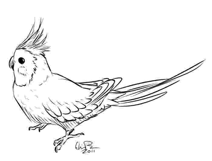 cockatiel coloring pages cockatiel by gloria pike scrapbooking ideas in 2019 pages cockatiel coloring