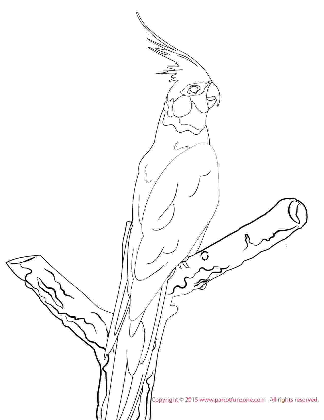 cockatiel coloring pages cockatiel cockatiel coloring pages