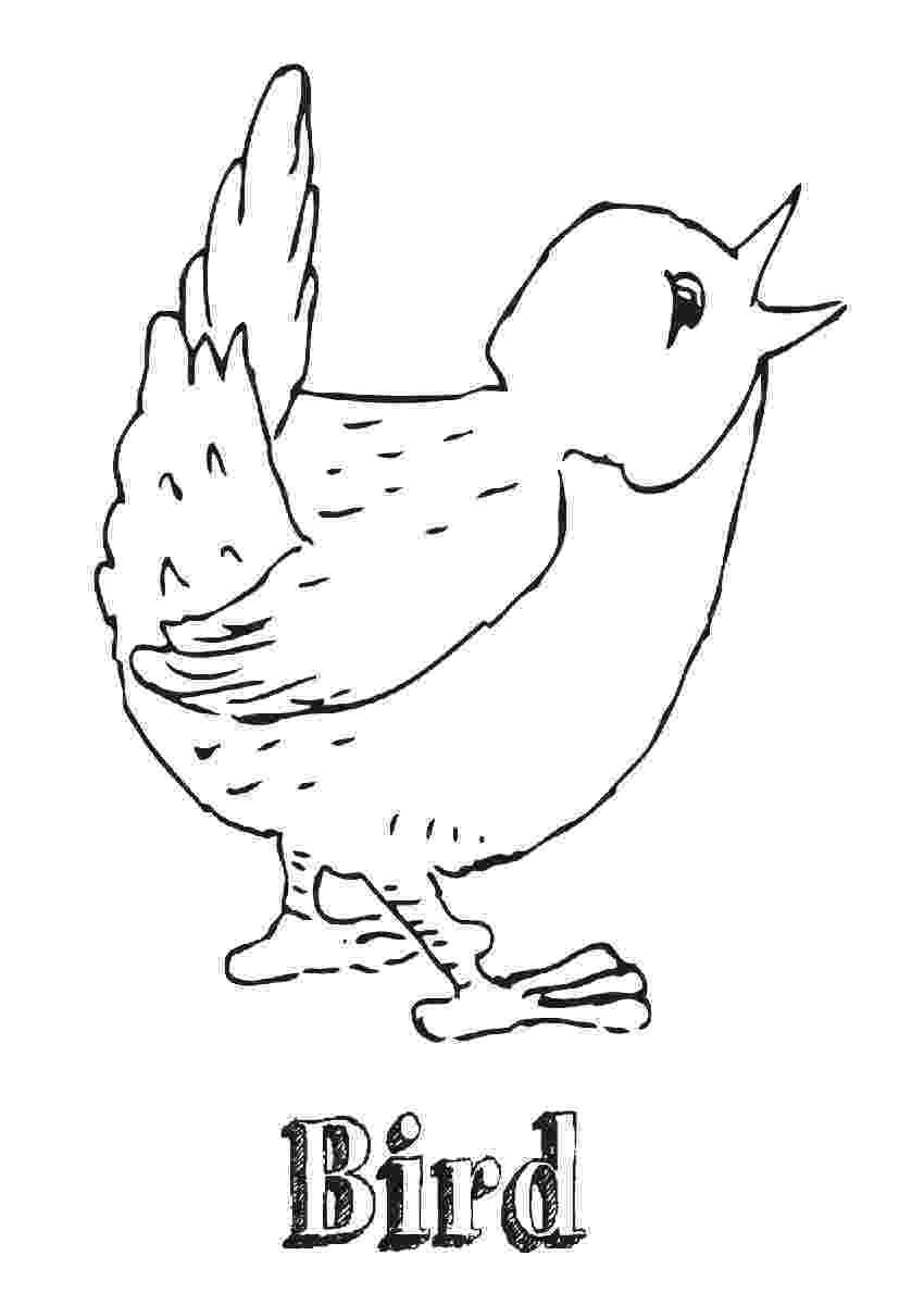 cockatiel coloring pages cockatiel coloring pages cockatiel coloring pages