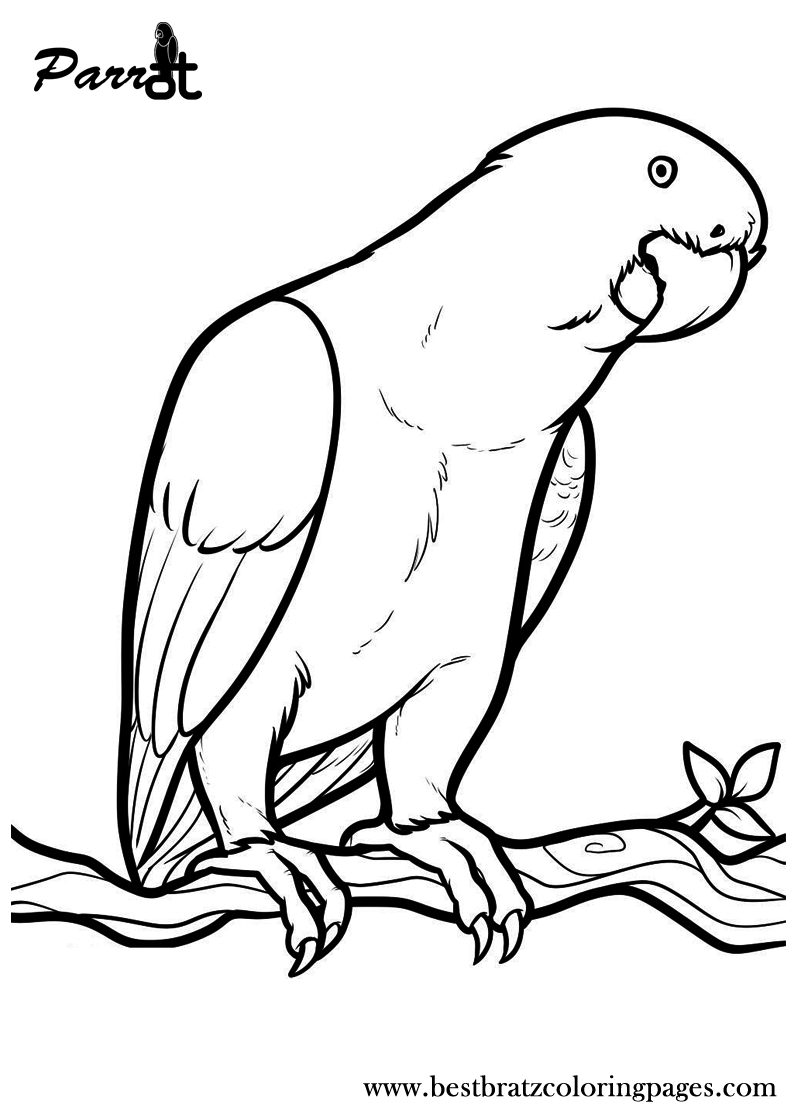 cockatiel coloring pages free printable parrot coloring pages for kids coloring cockatiel pages coloring