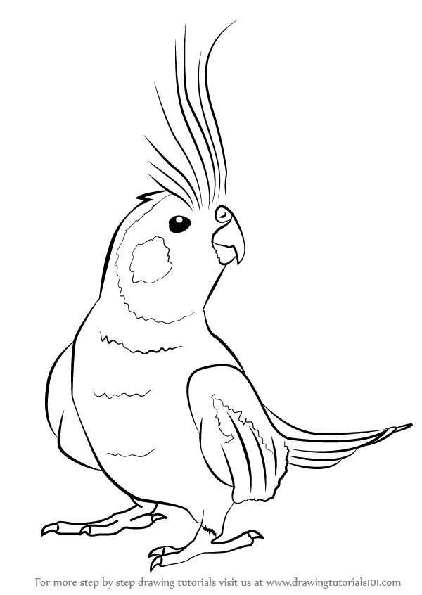 cockatiel coloring pages learn how to draw a cockatiel birds step by step pages coloring cockatiel