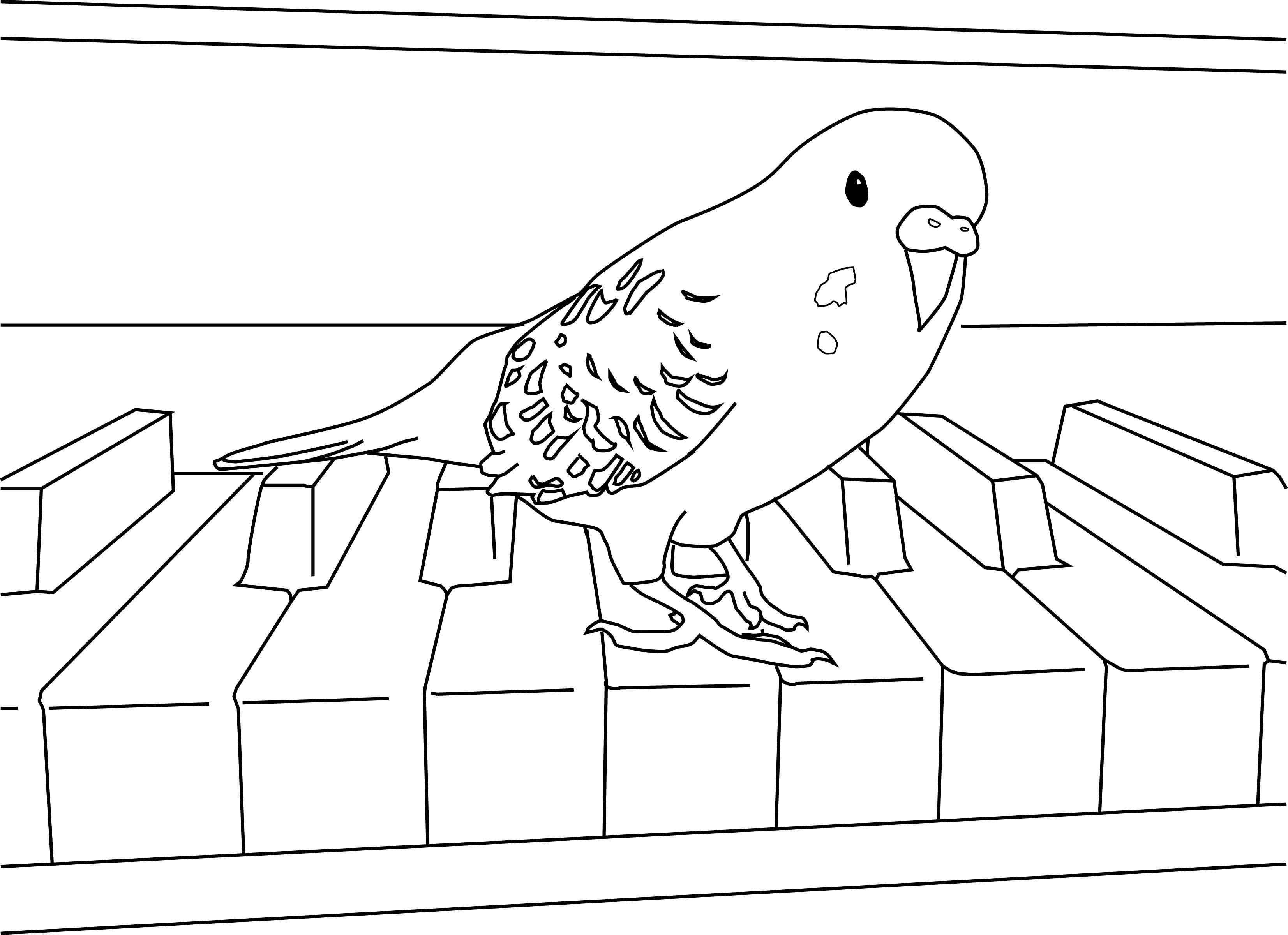 cockatiel coloring pages parakeet coloring pages coloring pages cool coloring pages cockatiel coloring