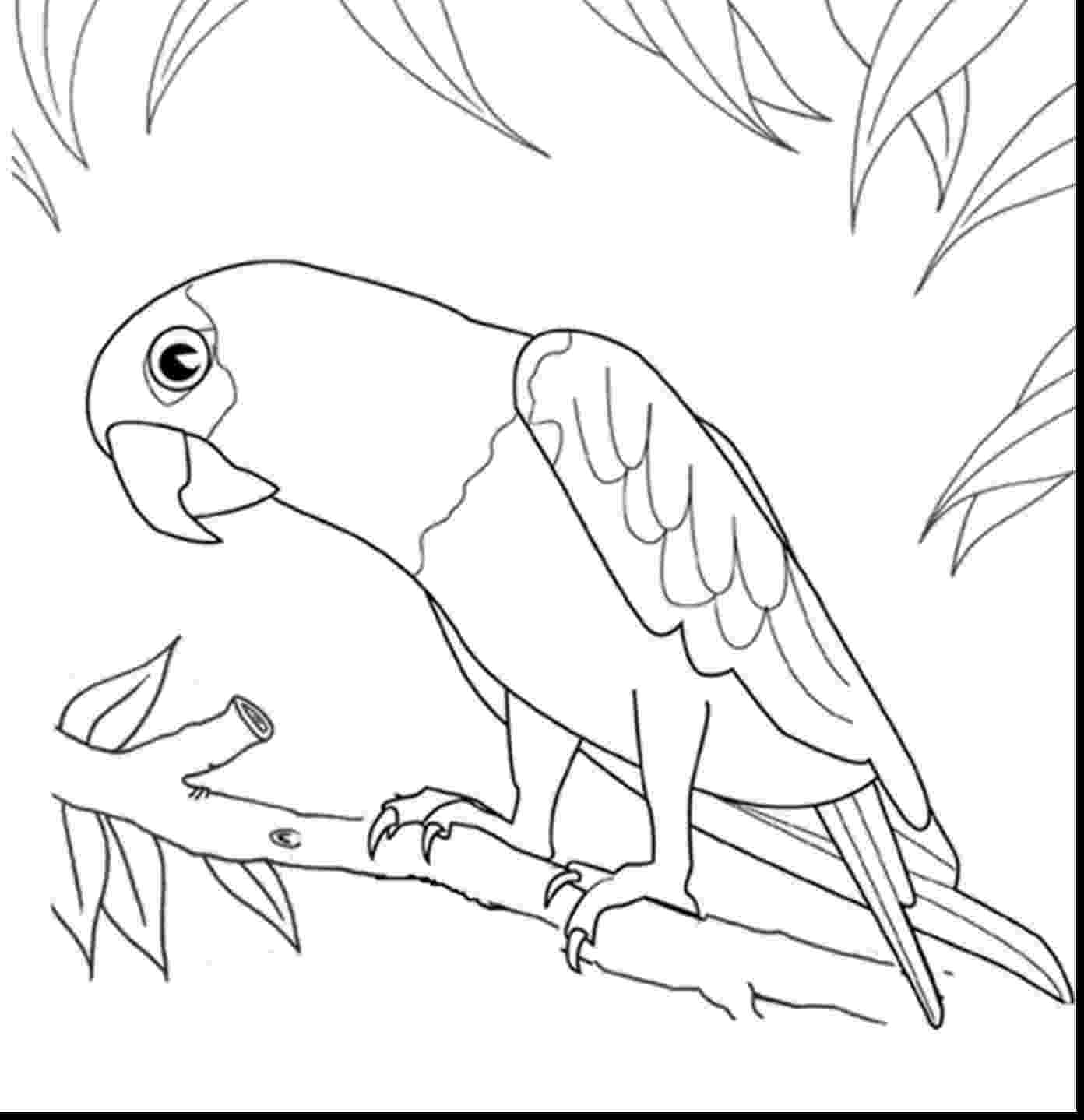 cockatiel coloring pages parrot bird drawing at getdrawings free download cockatiel coloring pages
