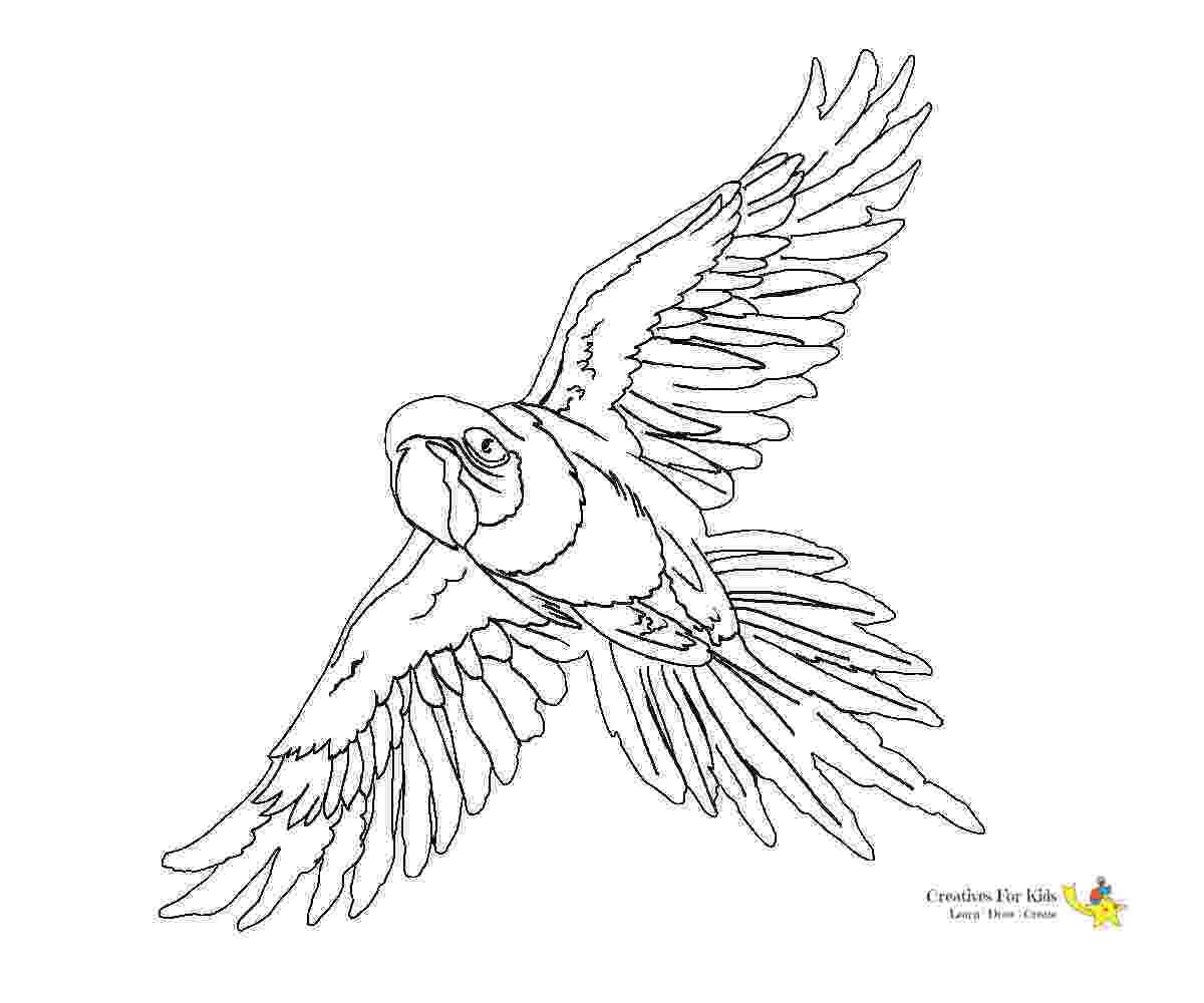 cockatiel coloring pages parrot coloring pages kiddo coloring cockatiel pages