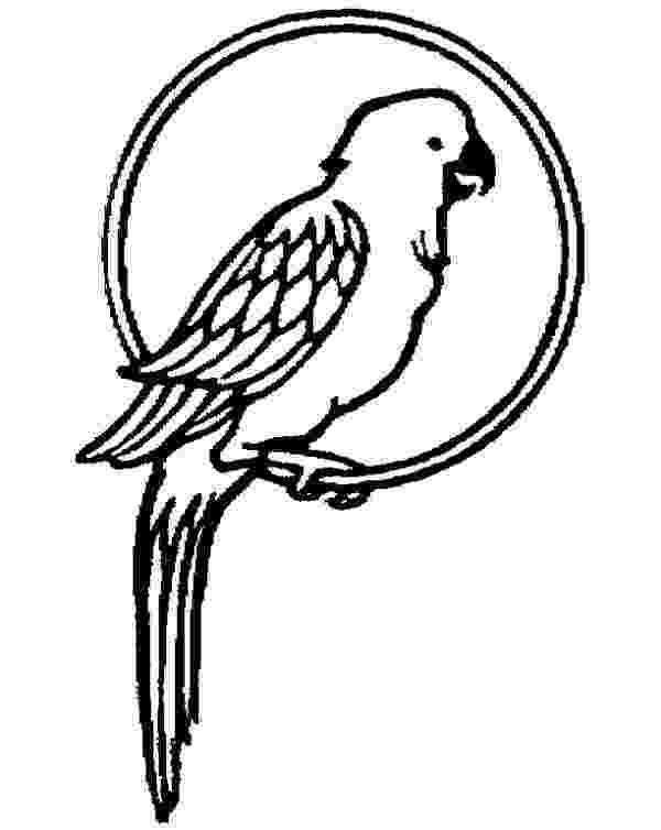 cockatiel coloring pages parrot pet coloring page coloring pages pinterest coloring pages cockatiel