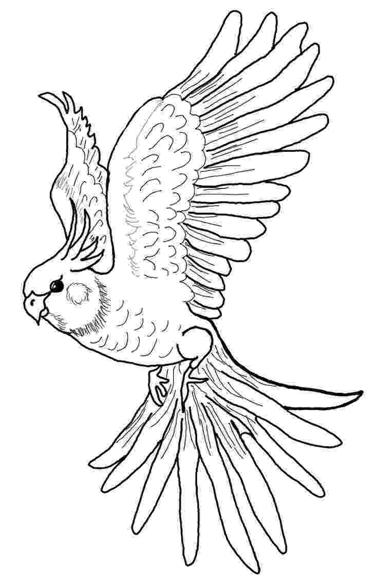 cockatiel coloring pages tie fighter coloring page at getcoloringscom free pages coloring cockatiel