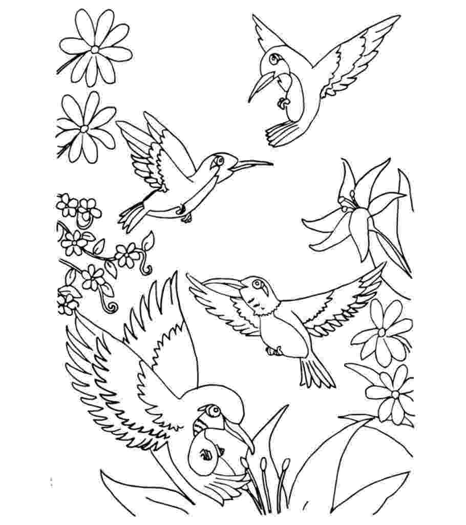 cockatiel coloring pages top 10 hummingbird coloring pages for your toddler coloring cockatiel pages