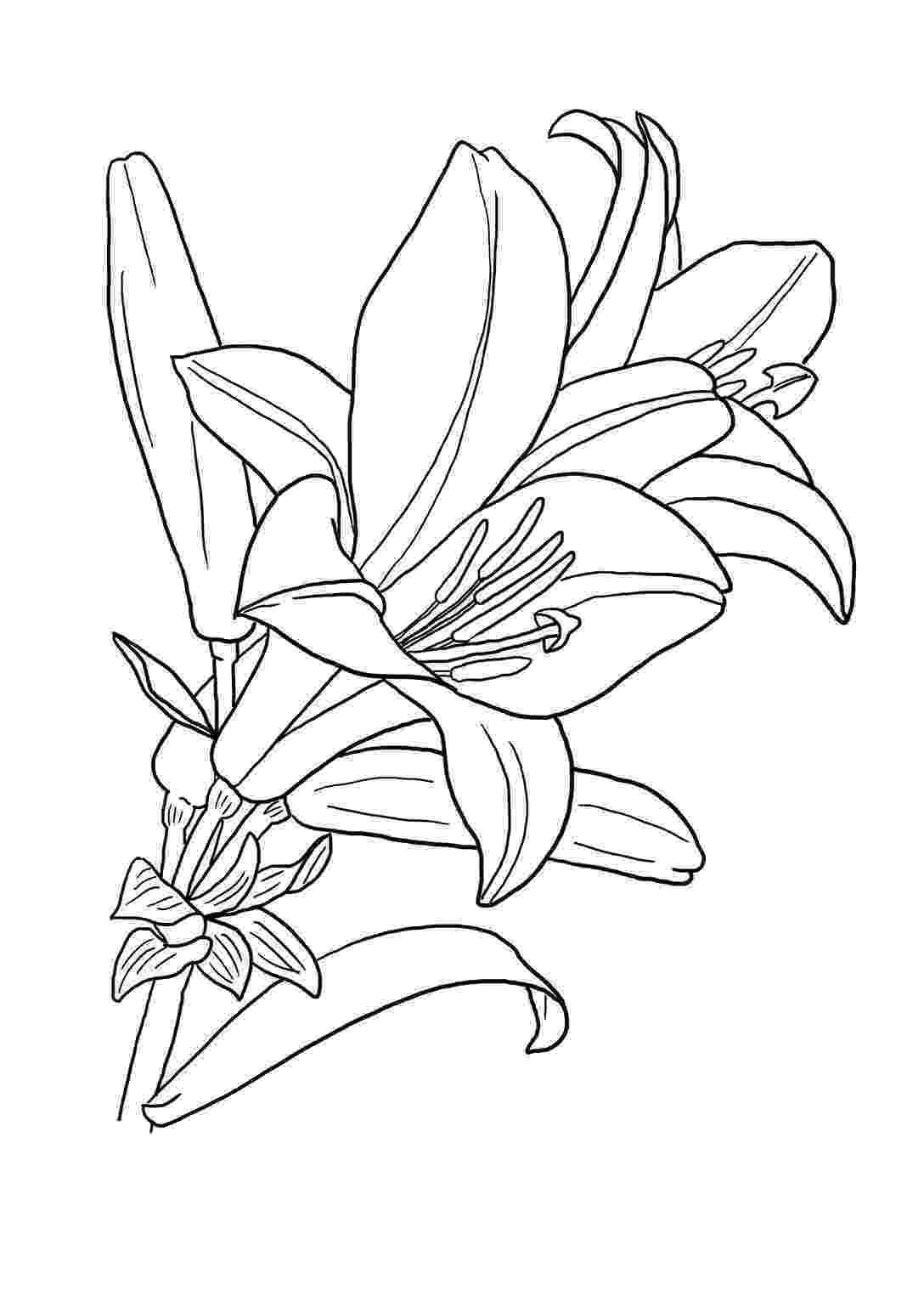 color page flower flower garden coloring pages to download and print for free color page flower