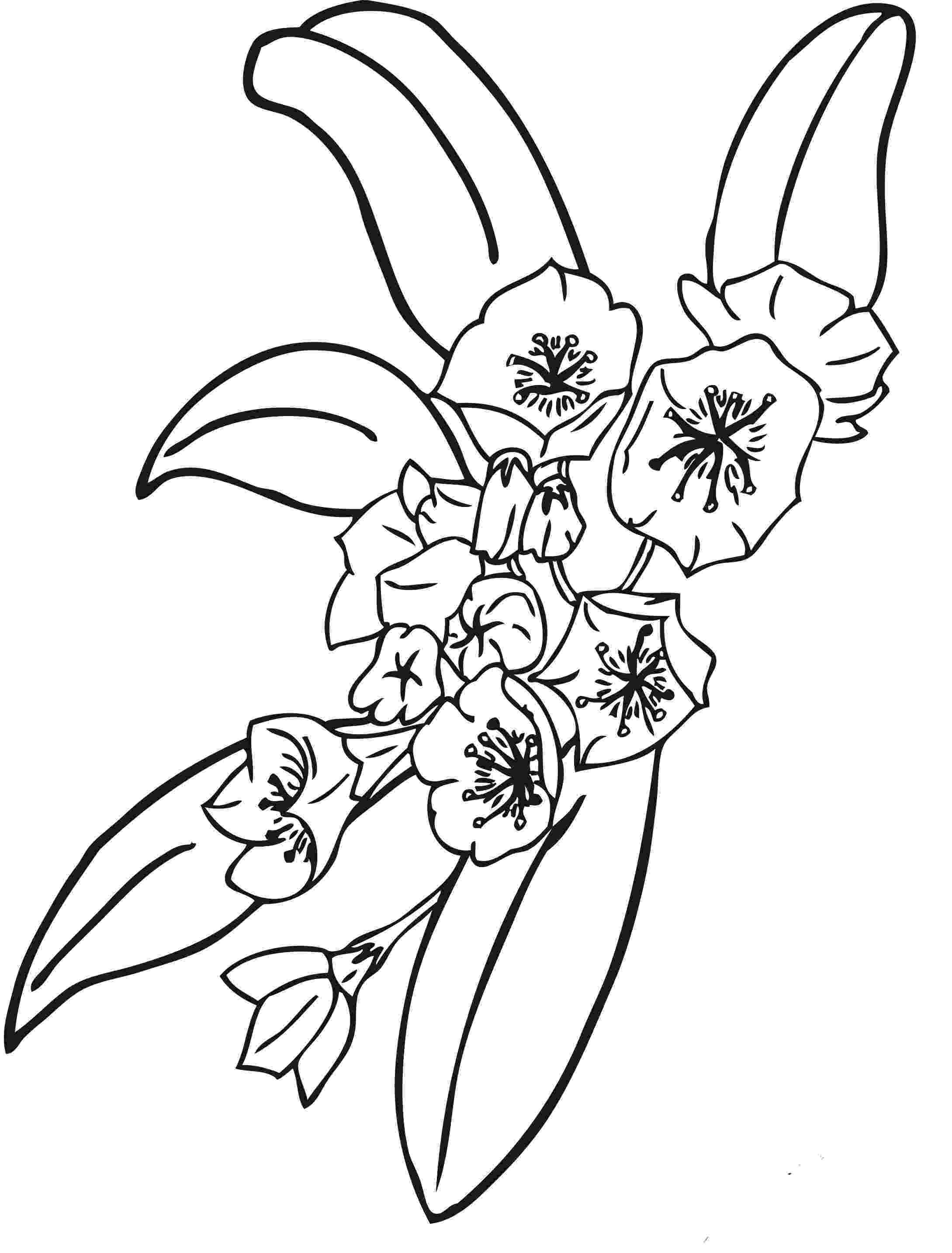 color pictures of flowers free printable flower coloring pages for kids best pictures of color flowers