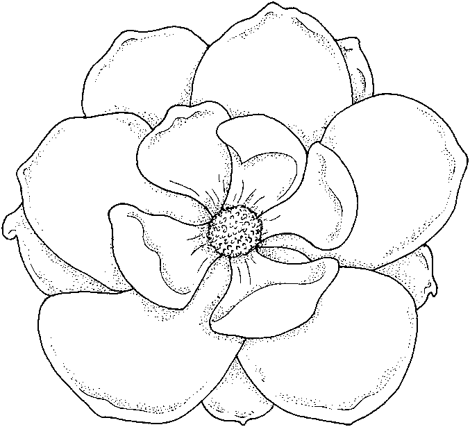 color pictures of flowers simple flower coloring pages getcoloringpagescom of flowers color pictures