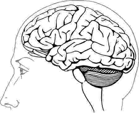 color pictures of the brain brain aneurysms symptoms diagnosis and treatment color pictures of brain the