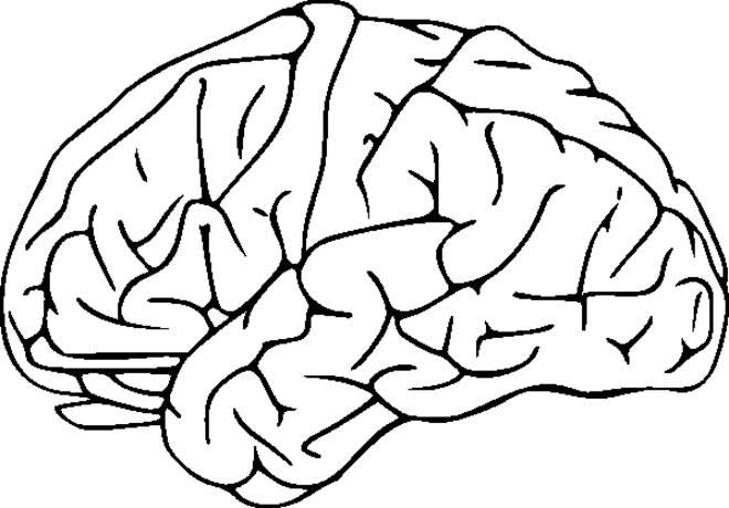 color pictures of the brain brain coloring page pages pictures imagixs human anatomy color of brain the pictures