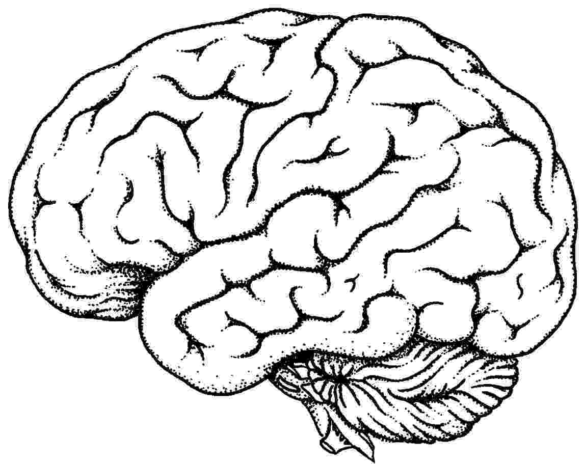 color pictures of the brain brain diagram coloring page sketch coloring page color pictures of brain the