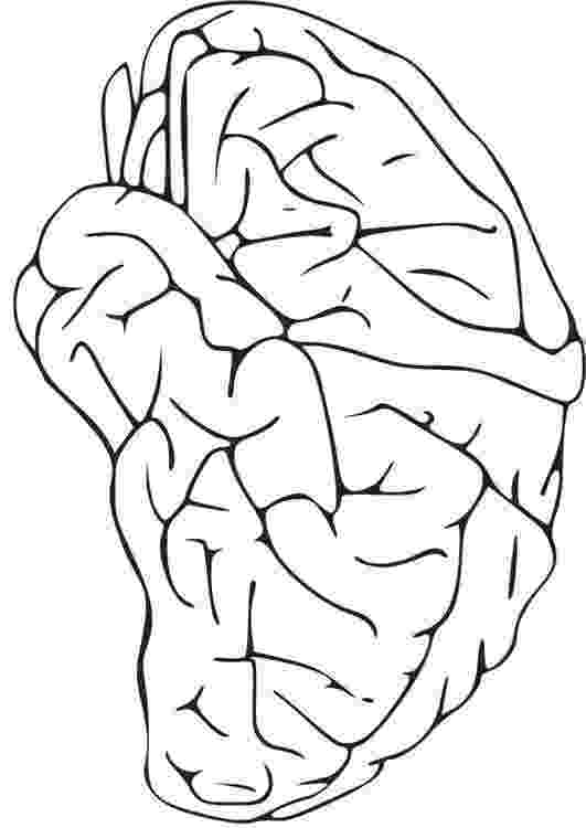color pictures of the brain brain jack image brain coloring pages of the color brain pictures