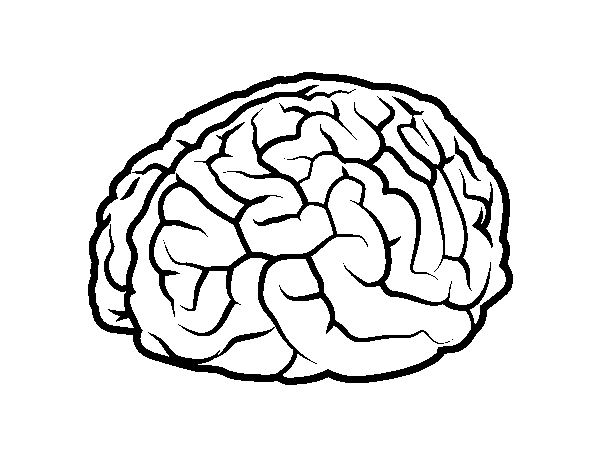 color pictures of the brain coloring page brain  coloring picture brain free of color brain pictures the