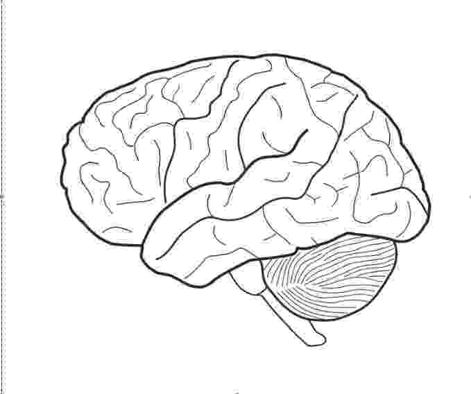 color pictures of the brain neuroscience resources for kids coloring book pictures color the brain of